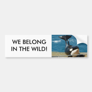 Orca: We belong in the wild Bumper Sticker