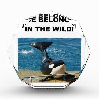 Orca we belong in the wild design award