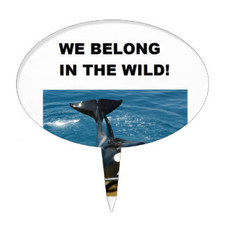 Orca we belong in the wild design cake topper