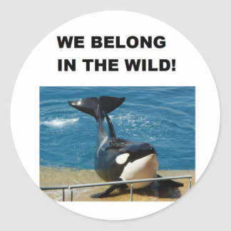 Orca we belong in the wild design classic round sticker