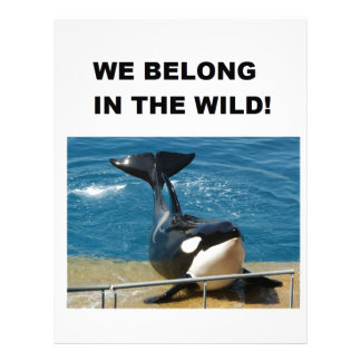 Orca we belong in the wild design letterhead