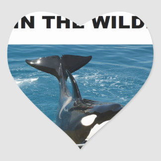 Orca we belong in the wild design heart sticker