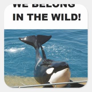 Orca we belong in the wild design square sticker