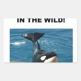 Orca we belong in the wild design rectangular sticker