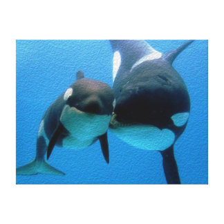 Orca Whale and Calf Canvas Print