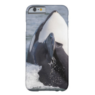 Orca whale breaching barely there iPhone 6 case