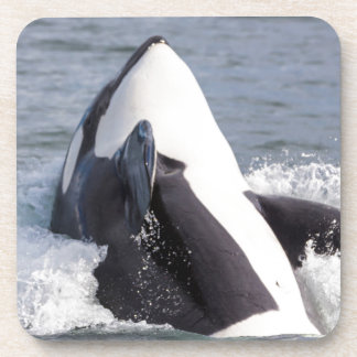 Orca whale breaching beverage coaster