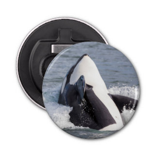 Orca whale breaching bottle opener
