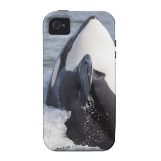 Orca whale breaching Case-Mate iPhone 4 cover