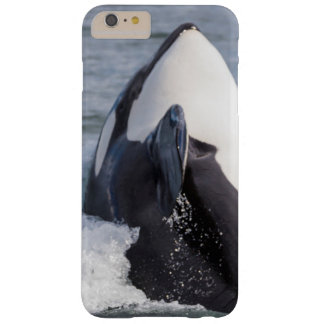 Orca whale breaching barely there iPhone 6 plus case