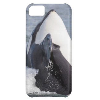 Orca whale breaching iPhone 5C cases