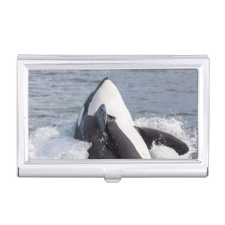 Orca whale breaching case for business cards