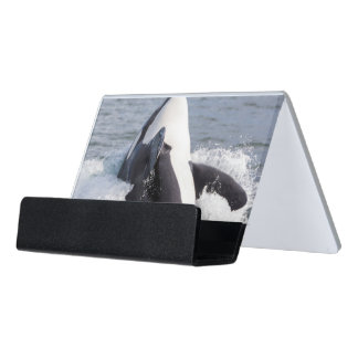 Orca whale breaching desk business card holder