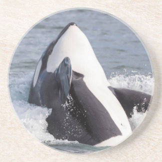 Orca whale breaching drink coaster
