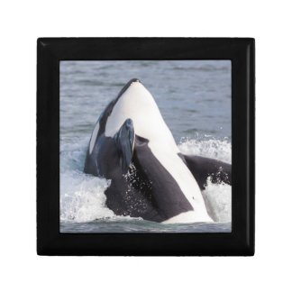 Orca whale breaching trinket boxes