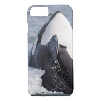 Orca whale breaching iPhone 8/7 case