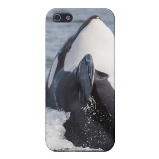 Orca whale breaching iPhone 5 covers