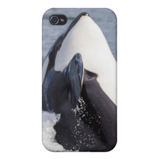 Orca whale breaching cases for iPhone 4