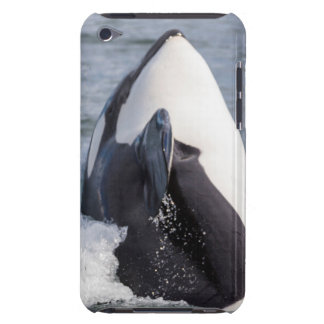 Orca whale breaching iPod touch cover
