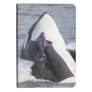 Orca whale breaching kindle touch cover