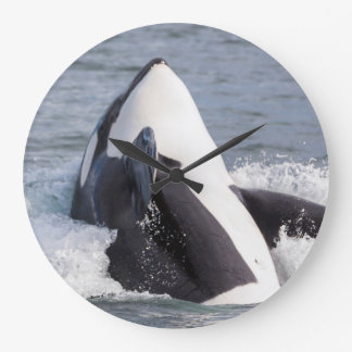 Orca whale breaching large clock