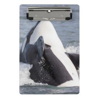 Orca whale breaching mini clipboard