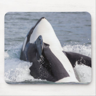 Orca whale breaching mouse pad