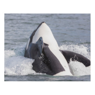 Orca whale breaching panel wall art