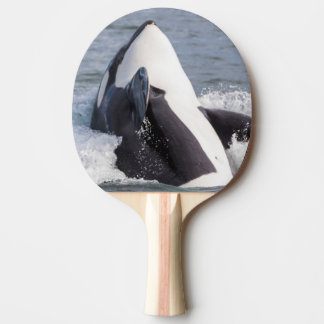 Orca whale breaching Ping-Pong paddle