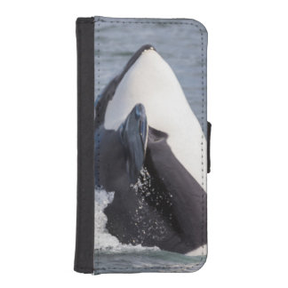 Orca whale breaching phone wallets