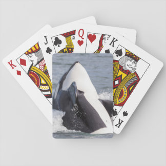 Orca whale breaching playing cards
