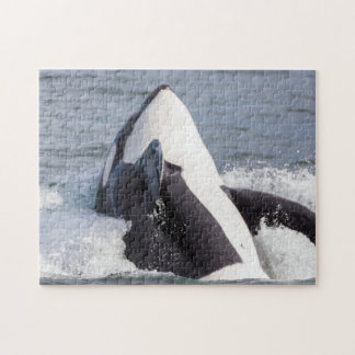 Orca whale breaching puzzle