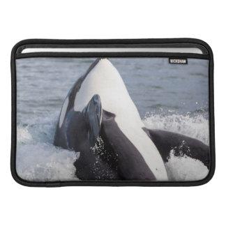 Orca whale breaching sleeve for MacBook air