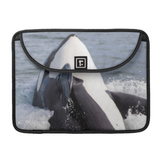 Orca whale breaching sleeve for MacBook pro