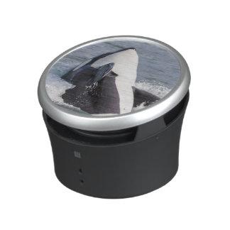 Orca whale breaching speaker