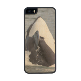 Orca whale breaching carved® maple iPhone 5 slim case