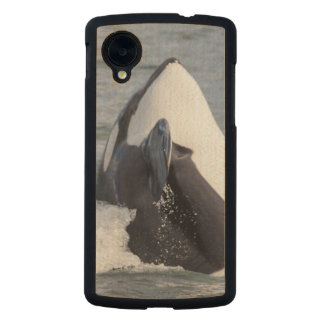 Orca whale breaching carved® maple nexus 5 slim case
