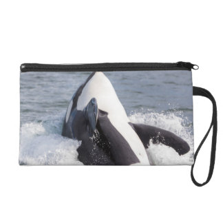 Orca whale breaching wristlet purse