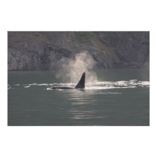 Orca Whale Breath Mist Poster