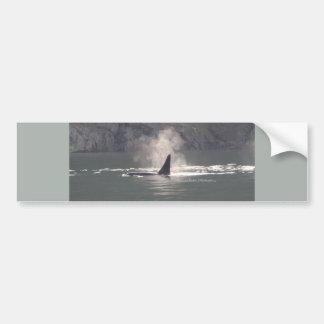 Orca Whale Breaths Out Mist in Whale Rich San Juan Car Bumper Sticker