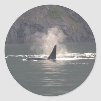 Orca Whale Breaths Out Mist in Whale Rich San Juan Classic Round Sticker