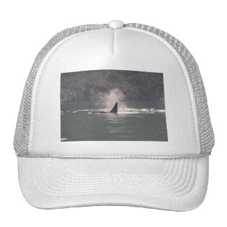 Orca Whale Breaths Out Mist in Whale Rich San Juan Trucker Hats