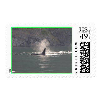 Orca Whale Breaths Out Mist in Whale Rich San Juan Postage