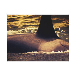 Orca Whale Gallery Wrapped Canvas