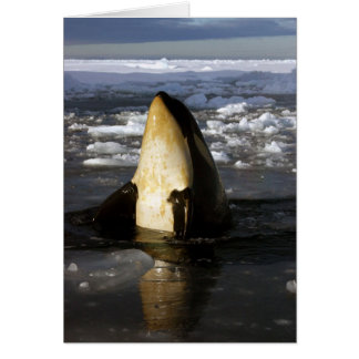 Orca Whale Greeting Card