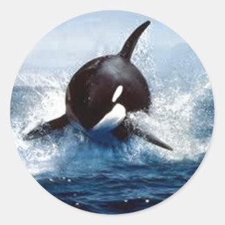 Orca Whale Classic Round Sticker