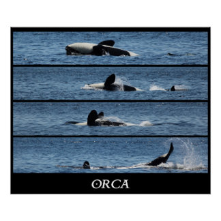 Orca Whale Collage Posters