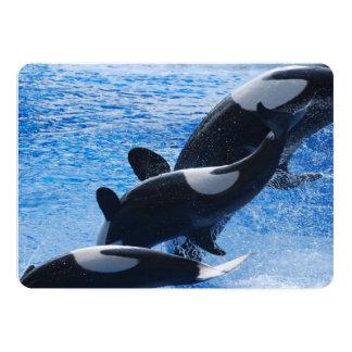 Orca Whale Cards