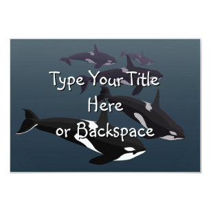 Killer Whale Invitations Announcements Zazzle