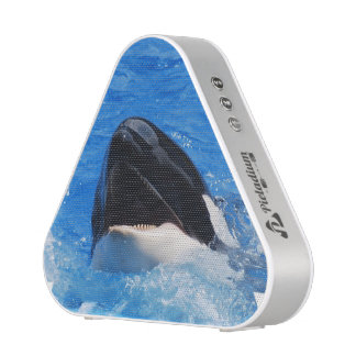 Orca Whale Speaker